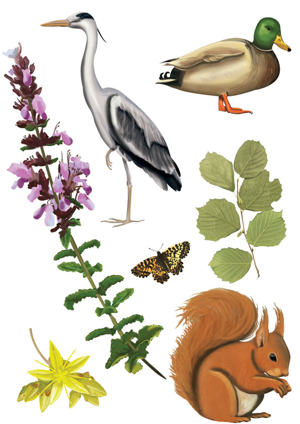 illustrations animaux et plantes
