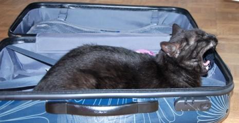 chat qui baille allongé dans une valise