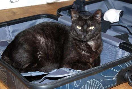 chat dans une valise